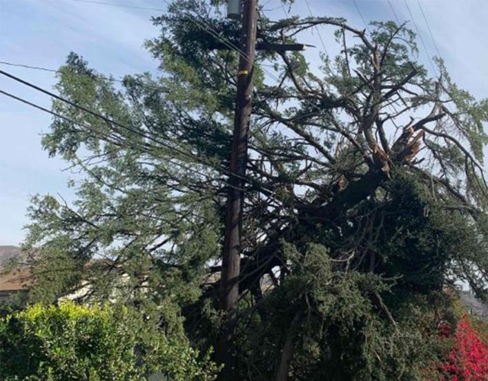 Electrical equipment damage by trees